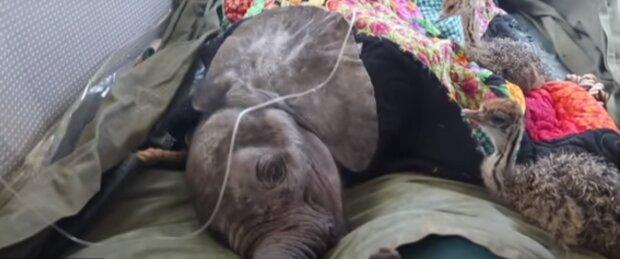 Ein verwaister Elefant umarmt jeden Tag einen Strauß. Er verlor seine Mutter, aber gewann einen Freund