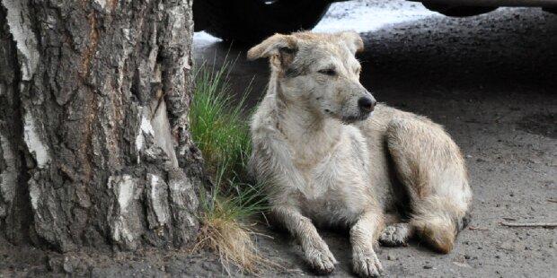 Die Geschichte von Rowdy: ein verlassener Hund mit einer Notiz an seinem Halsband