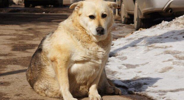Das Paar gab 3.500 Pfund aus, um den Hund von Barbados nach Großbritannien zu bringen