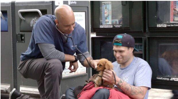 Der Arzt behandelt kostenlos Tiere auf der Straße