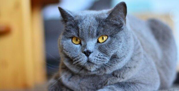 Eine Katze wurde 3.000 Meilen von zu Hause entfernt in England gefunden: Es wurde enthüllt, wie sie dorthin kam