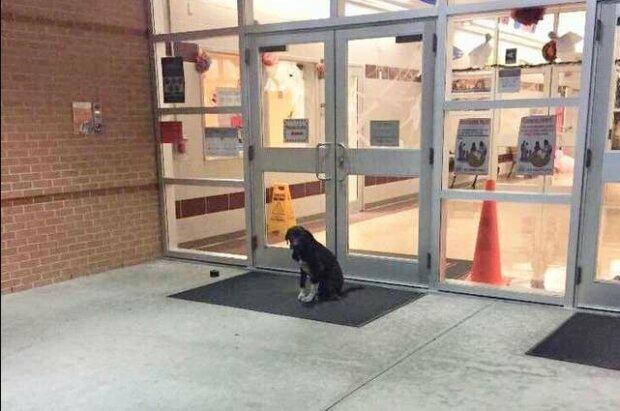 Jeden Morgen saß der Hund an der Schultür und wedelte mit dem Schwanz: er wartete auf Hilfe
