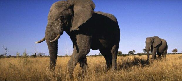 Ein Elefant in Not kommt zu den Menschen: Sie haben eine schwierige Rettungsaktion durchgeführt