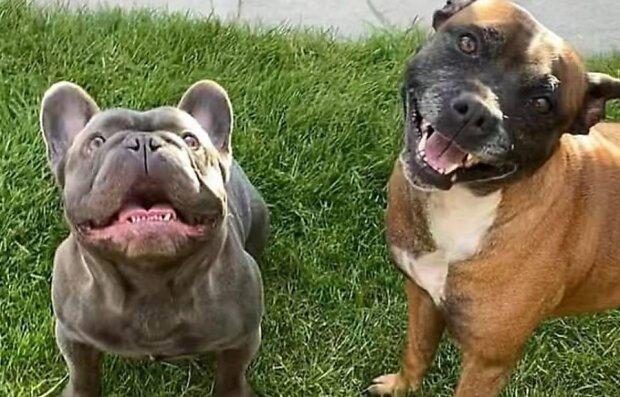 Unschuldige Spielchen: Der Hund rettete der Besitzerin dank seiner Achtsamkeit das Leben