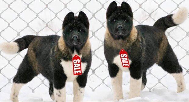 Die teuersten Hunde der Welt: Wie der Preis zustande kommt und was ihn rechtfertigt