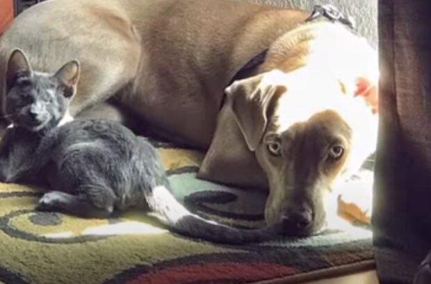 Ein wahrer Freund: Der Hund wurde zum besten Freund und zur Stütze für das Kätzchen, das nicht sehen kann