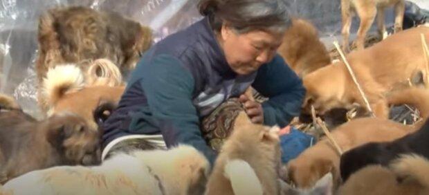 Wie eine 61-jährige Frau sich um 200 Hunde kümmert