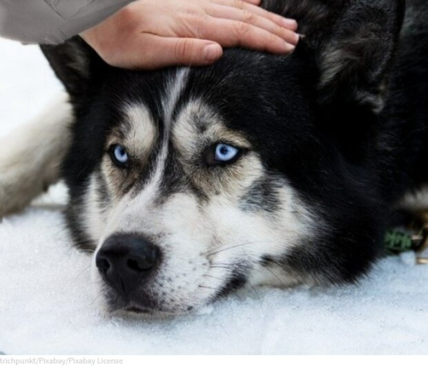 Wer ist der Chef des Hauses: Selbst die Besitzerin kann sich mit dem sturen Hund nicht gut verstehen