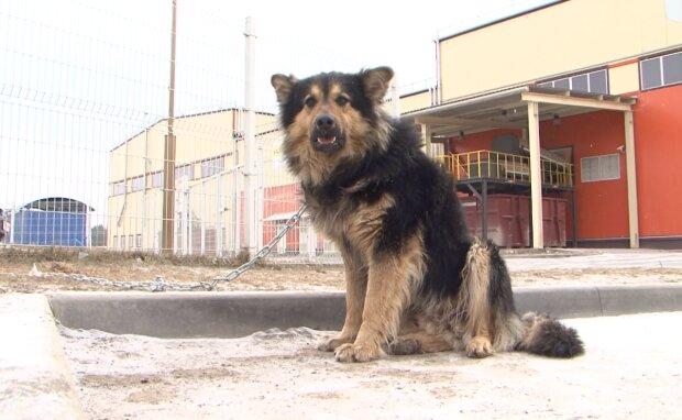 Eine Frau fütterte einen streunenden Hund und er weinte vor Glück
