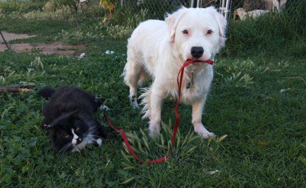 Der Hund streunte durch die Tierheime und fand endlich sein Zuhause