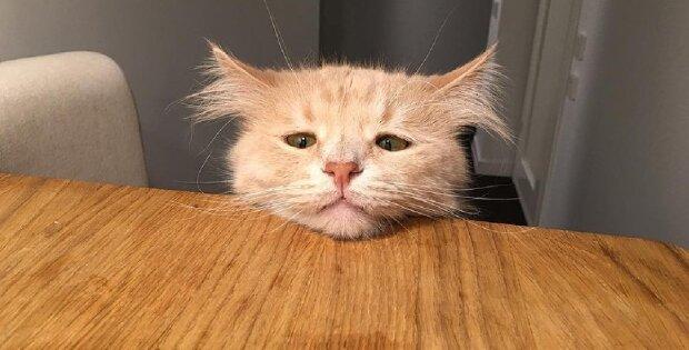 Sie wollten das besondere Kätzchen loswerden, aber der Tierarzt wollte das nicht zulassen und fand die Besitzer