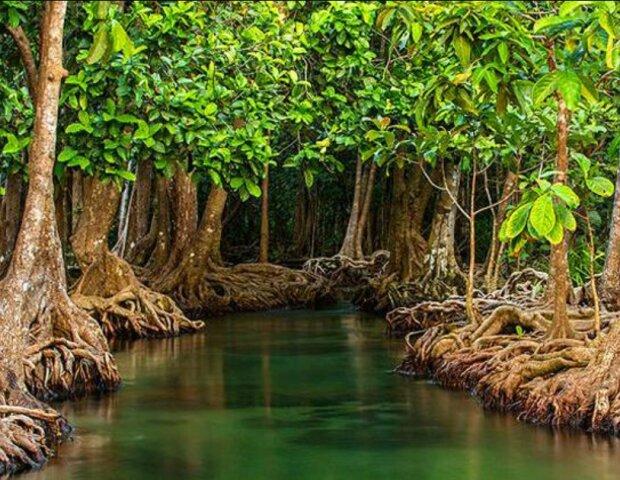 Der Teenager zog 524 Baumsetzlinge heran, um die Küste nach dem Hurrikan wieder aufzubauen