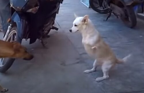 Känguru-ähnlicher Hund in Schwierigkeiten: Freiwillige Helfer kommen zur Rettung
