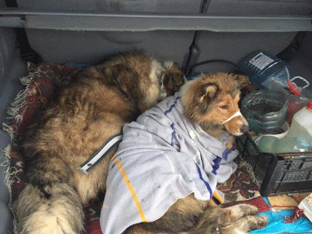 Der Hund schützte seine Freundin zwei Tage lang vor den Zügen und lag neben ihr auf den Schienen