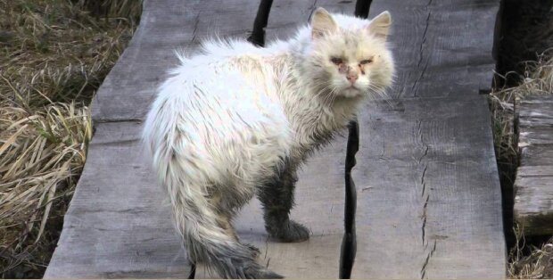 Ein Kätzchen wurde in schlechtem Zustand ins Tierheim gebracht, aber die Tierärzte konnten ihn heilen