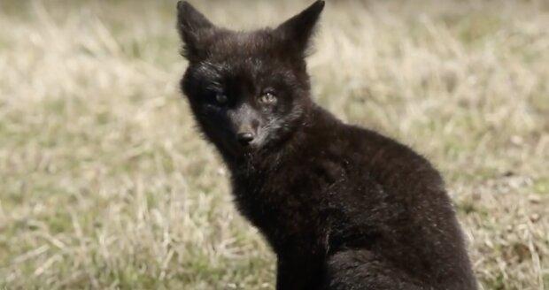 Unbekanntes Tierchen. Quelle:Screenshot YouTube