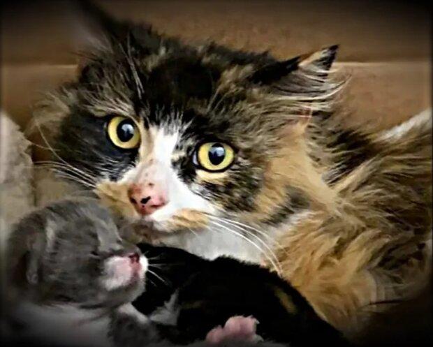 Die Katzen-Mama kam zu den Menschen und bat sie, ihre Babys zu retten