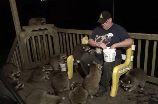 Ein Opa füttert seit 20 Jahren nachts wilde Waschbären mit Fastfood: Das hat er seiner Frau versprochen