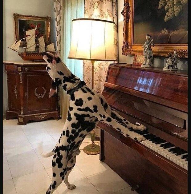 Der Klang des Klaviers weckte die Frau in der Nacht auf und sie beschloss, dem unbekannten Musiker zu folgen