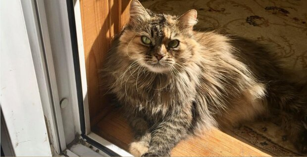 Wie ein Kätzchen, das im Tierheim lebte, einem Mann half, um die Hand und das Herz seiner Liebsten zu bitten