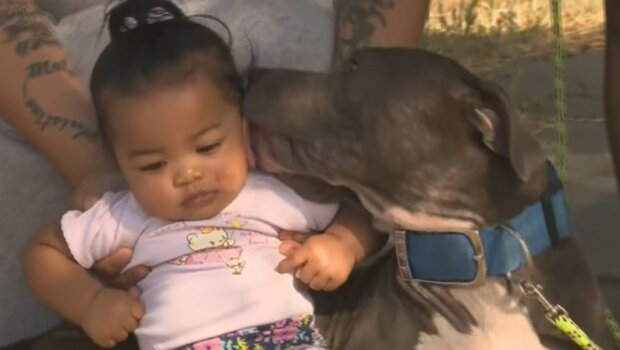 """""""Ich bin ihr dankbar"""": Die Hündin rettete ein sieben Monate altes Baby, indem sie ihre Windel aus dem Kinderbett zog"""