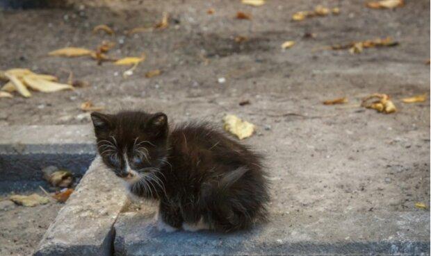 Die Katze hatte zwei Wochen lang an derselben Stelle auf ihre Besitzerin gewartet, die im Krankenhaus war