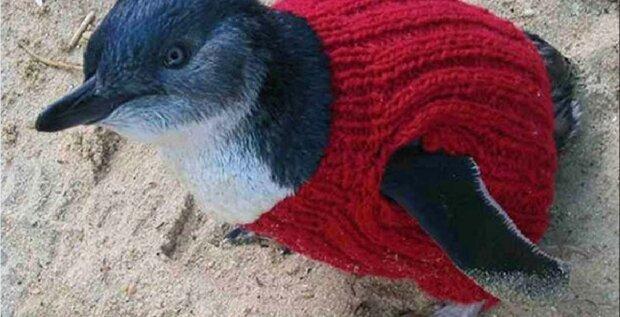 98-jährige Großmutter strickt Pullover für Pinguine, um sie warm zu halten