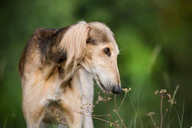 Riesige Größe: Die Besitzer des Hundes glauben, dass es in seiner Familie Giraffen gab