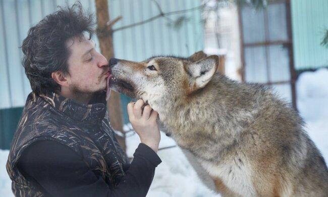 Der Mann rettete das Wolfswelpe, und Jahre später kam ihm der Wolf zu Hilfe