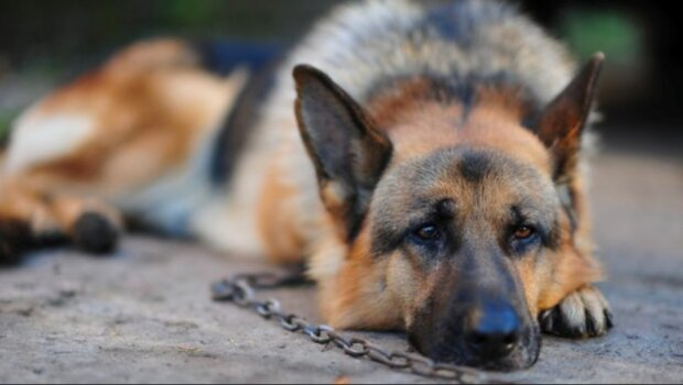 Der Hund verlor den Glauben an den Menschen, aber der kleine Junge half ihm