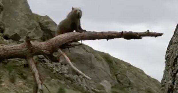 Ein Bärchen. Quelle:Screenshot YouTube