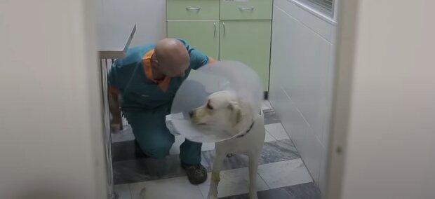 Der verängstigte Welpe konnte nicht aufhören zu weinen und der Arzt nahm die Sache selbst in die Hand