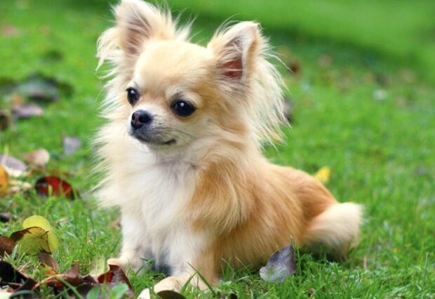 Ein Hund. Quelle: Screenshot YouTube