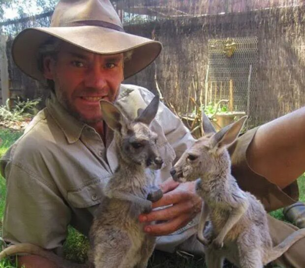 Die Rettung: Wie hilft ein Mann Känguruhs, die ohne Mütter geblieben sind