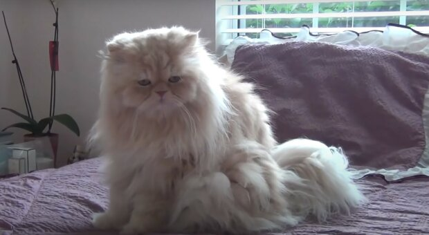 Katze. Quelle: screen YouTube