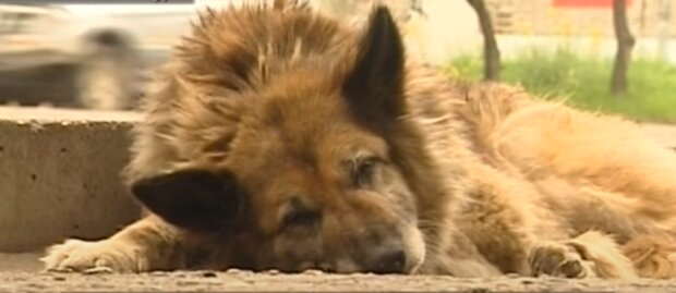 Denkmal für Naida: ein gewöhnlicher Mischling wartete 12 Jahre lang auf ein Besitzer