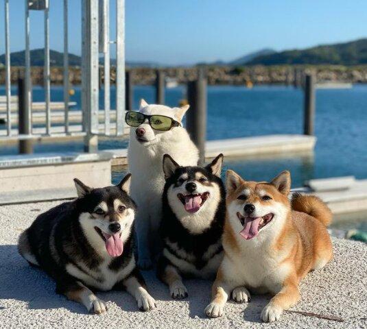 """Ein Hund, der gerne """"nicht wie alle anderen"""" ist, freut jeden mit seinen Mätzchen"""