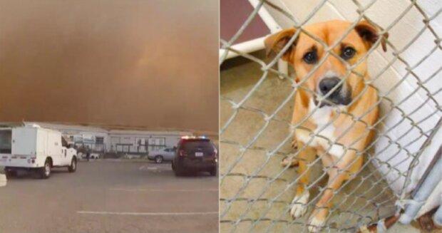 Die Polizisten zogen die Tiere sehr schnell aus dem Tierheim heraus, um vor dem Feuer sie zu retten
