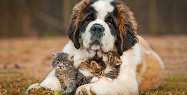 Einander finden: Ein verwaistes Kätzchen freundet sich mit einer Hündin an, die ihre Welpen verloren hat