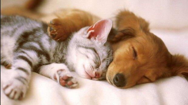 Katze und Hund finden zwei Jahre nach dem Verlust ihrer Besitzer ein neues Zuhause