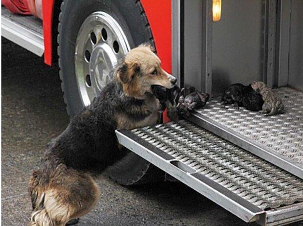 Die Hündin rettete ihre Welpen aus einem brennenden Gebäude und brachte sie direkt zum Feuerwehrwagen