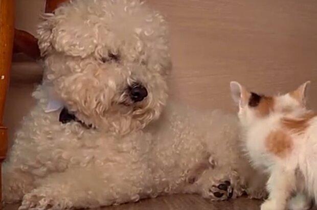 Ein guter Hund sucht nach streunenden Katzen und hilft, sie zu retten