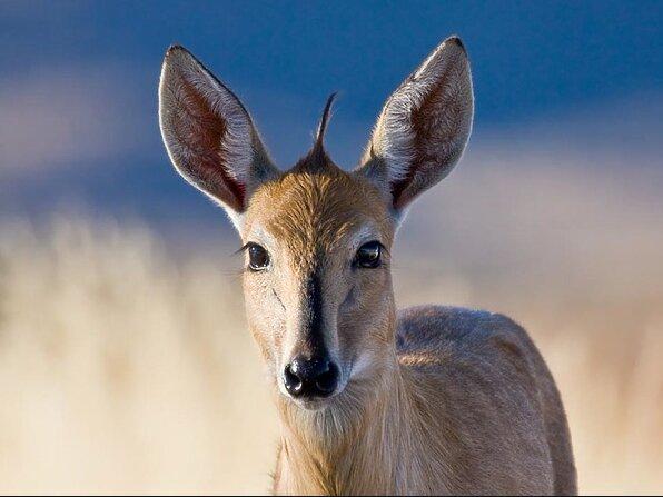 In der Tschechischen Republik nahm ein Hirsch einem Jäger ein Gewehr ab und rannte damit in den Wald