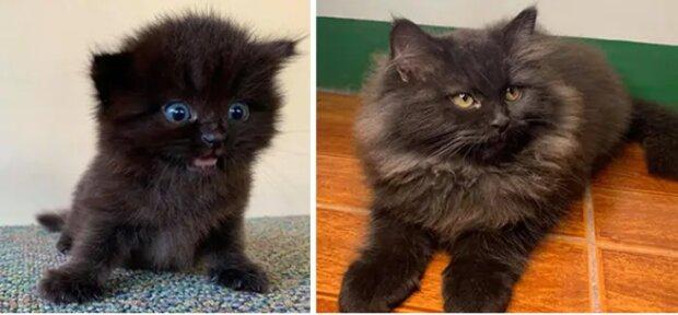 Eine Geschichte von Freundschaft und Liebe: Wie sich Haustiere nach dem Treffen mit ihren Besitzern veränderten