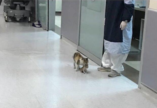 Katze brachte ihr Kätzchen zu Tierärzten. Quelle: Screenshot Youtube