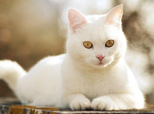 Wie eine kluge Katze ihrem Besitzer das Leben rettete