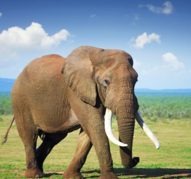 Ein Elefantenweibchen wurde dank seines modischen Haarschnitts zum Star des Hochglanzmagazins