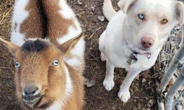 Der Hund lief von zu Hause weg, kehrte aber bald mit zwei neuen Freunden nach Hause zurück