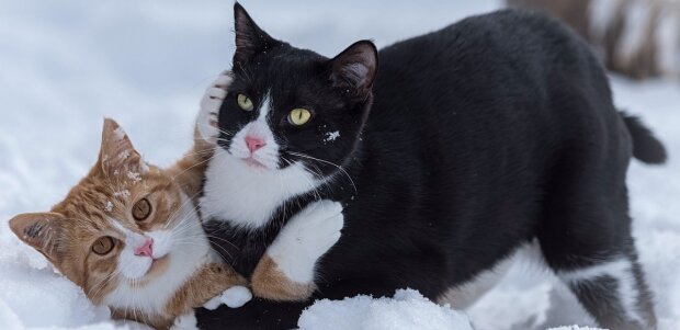 Wie zwei Katzen ein Ehepaar retten