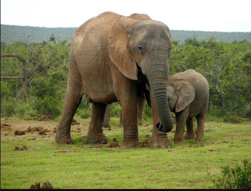 Der kleine Elefant dachte, dass sein Freund ertrinken würde, also eilte er zur Hilfe